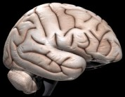 $3 million seeded to center for studying brain trauma