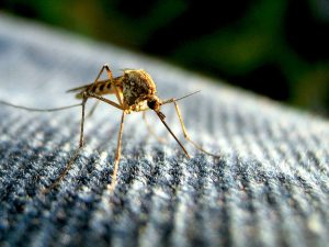 zika virus and microcephaly